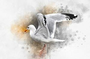 No Limits - Kreative Techniken im Aquarell | Aquarell, Zeichnen, Collage, Papier, Bleistift